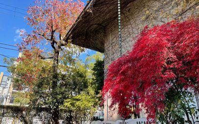 平生記念館の紅葉