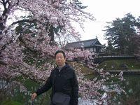 吉良 健裕さん 写真:弘前城の桜