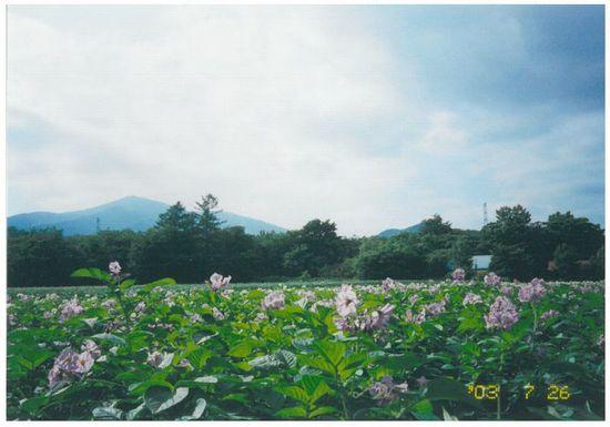 「佐幌岳(1059M)サホロスキー場」