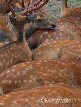 「鹿の国から」